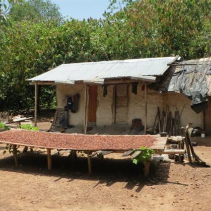 Asekasu No.II - Vor den Häusern, die Kakaobohnen zum trocknen in der Sonne auf Bambusmatte