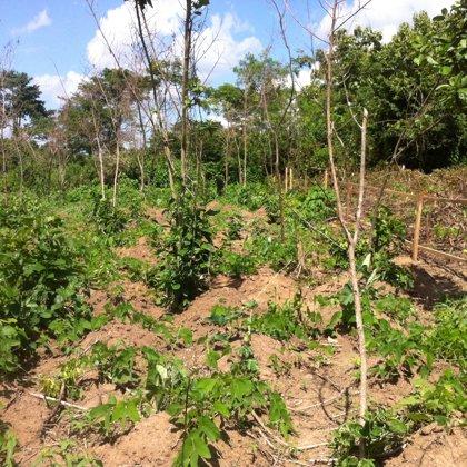 Unsere Farm