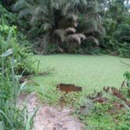 Vor dem Brunnenbau: Wasserlöcher